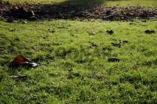 Rasen im Herbst, Lawn in autumn