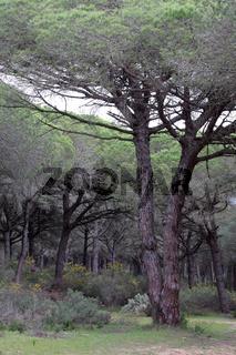 Parque Natural de la Brena 003. Andalusien