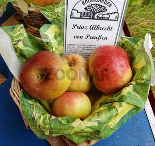 Prinz Albrecht von Preußen, Apfel, Malus, domestica, Alte Apfelsorte