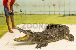 Thailand, zoo Show of crocodiles at Crocodile Farm and Zoo