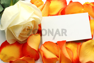 Rose and message on a petals. Background
