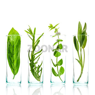 Close Up bottles of essential oils with fresh herbs . Sage, rosemary, sweet basil leaves and peppermint branch isolated on white background.