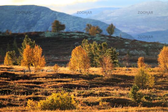 Grimsdalen  Rondane NP Norwegen