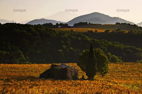 Mt. Ventoux, Beaumes-de-Venise, Provence, France