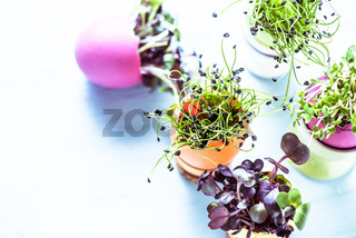 Alfalfa sprouts in Easter eggs shell, from above