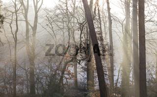 Wald im Winter, forest in winter