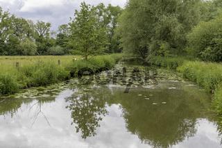 Weidelandschaft am Fluss im Münsterland, NRW