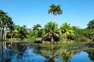 Tropical lake nearby crocodile farm at Playa Larga, Bay of Pigs, Matanzas, Cuba.
