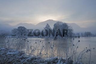 Schilf am Kochelsee mit Frost und Nebel, Bayrische Voralpen, Oberbayern, Bayern, Deutschland, Europa, reeds at lake kochelsee, upper bavaria, germany, europe