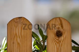 Holzzaun mit Grünpflanzen