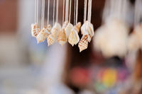 Seashells on dark background on tropical resort