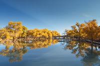 beautiful ejina in autumn
