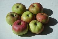 20210929_Malus domestica Brettacher, Apfel, apple.jpg