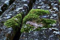 Moos auf einer Holzbank
