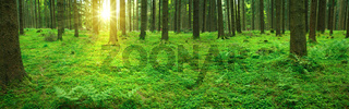 Sunlight in the germany forest. Nature background.