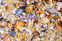 Overhead view of washed up and broken sea shells on sandy beach
