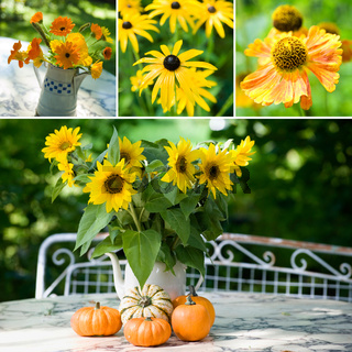 Herbstblumen Collage