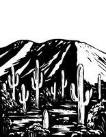 Wasson Peak in Tucson Mountain District of Saguaro National Park Arizona USA WPA Black and White Art