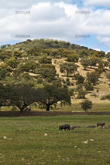 Typische Landschaft der Extremadura