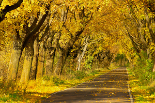 Goldener Herbst in Deutschland