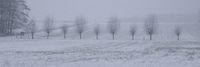 Kopfweiden mit Schneefall