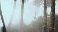 coconut palms in deep morning fog