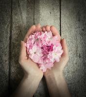 Hände voll Blüten