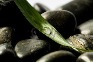 steine mit blatt und tropfen