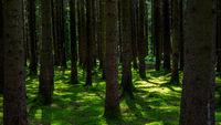 Shady woodland with moss