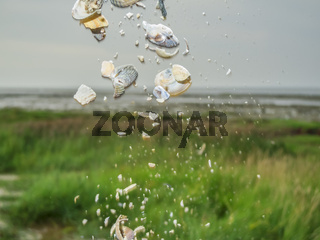 Falling clams in the salt marshes