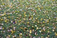 Herbstlicher Rasen