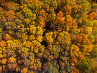 Drone looking down on beautiful colorful variegated autumn foliage of deciduous forest in October