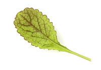 Asia-Salat