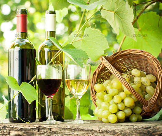 Red and white wine bottles, two glasses and grapes in basket