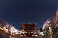 Temple and going to see cherry blossoms at night and stars
