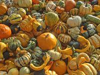 Heap of decorative pumpkins