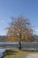 Herbst am Schhliersee