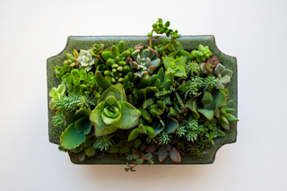 Succulents in neprite planter on white background