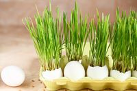 Green wheat sprouts. Easter decorations. Easter egg. Spring composition. Natural Easter eggs with wheat grass. Stylish Rural still life. Zero waste concept