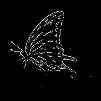Beautiful geometric butterfly on a black background