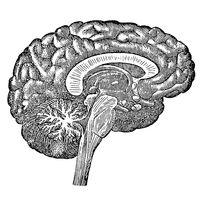 Vintage Gehirn als Idee und Kreativität Konzept