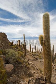Cardon cactus at Isla de Pescado, bolivia