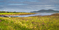 Meadow with wildflowers and marsh with old rusty paddle boat in Ring of Kerry