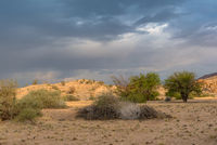 Landscape of the dry savannah in the northwest of Windhoek, Namibia