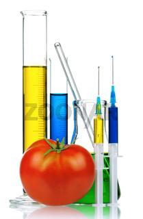Genetically modified organism