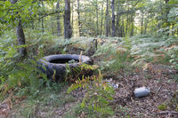 Black tire in forest