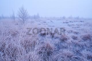 Rehdener Geestmoor im Winter