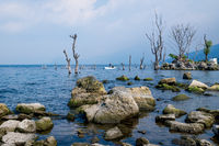 Beach of lake Atitlan with rocks, dead trees and fisherman in traditional canoe, San Pedro la Laguna, Guatemala