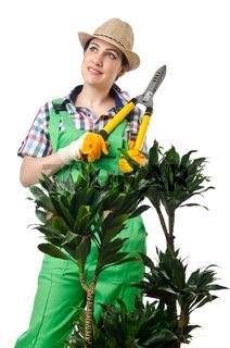 Woman gardener trimming plans on white
