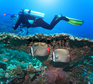 Diver and Angelfishes